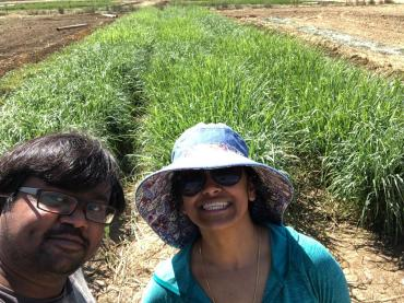 Ramana and Kavitha braving the Davis heat to sample the JBEI switchgrass field trials
