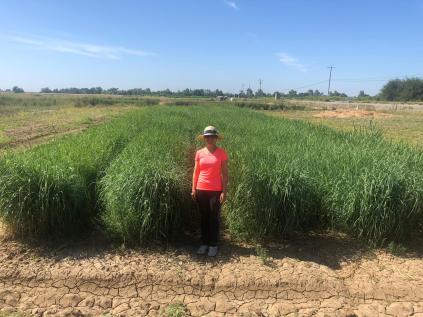 Yuan and the switchgrass plots